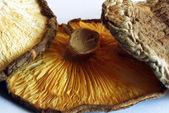 Shiitake mushrooms — Stock Photo