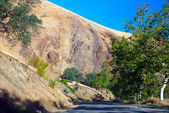 Tree Road Yucca Valley desert California — Stock Photo