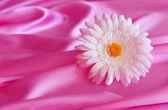 Flower, silk, texture, background. — Stock Photo