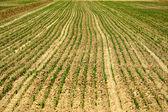Field, arable land. — Stock Photo