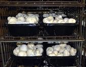 Mushroom Farm. — Stock Photo