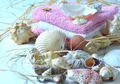 Collection of seashells. — Stock Photo
