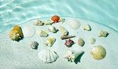 Seashells under water. — Stock Photo