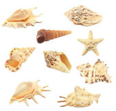 Collection seashell — Stock Photo