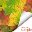 Foto de Stock  : Autumn maple leaves