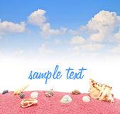 Shell sea sand blue sky — Stock Photo