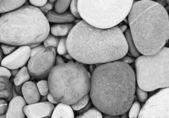Sea stones shells background — Stock Photo