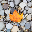 Autumn leaf background sea stones — Stock Photo #22058777