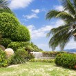 Tropical garden  — Foto Stock
