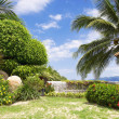 Tropical garden — Stock Photo #23832259