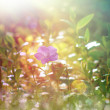 Spring grass and wild flower — Stock Photo