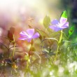 Stock Photo: Spring grass and wild flower