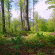 Stock Photo: Beautiful summer forest scene