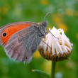 A butterfly standing on a daisy bud — Stock Photo