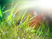 Spring grass and a butterfly — Stock Photo