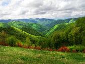 Beautiful summer mountain scene — Stock Photo