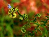 Un parado de mariposa sobre helechos salvajes — Foto de Stock