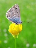 Bir kelebek duran sarı çiçek — Stok fotoğraf