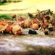 Aging autumn photography - Stock Photo