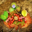 Aging autumn photography — Stock Photo
