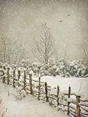 老化冬季摄影明信片 — 图库照片
