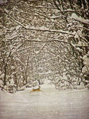 Aging winter photography postcard — Stock Photo