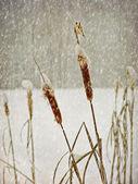 Cartão postal de fotografia de inverno envelhecimento — Foto Stock