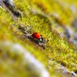 Red ladybug in the green grass — Stock Photo #23139518