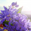 Stock Photo: Purple bouquet of wild spring flowers