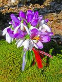 Spring wild flowers bouquet — Stock Photo