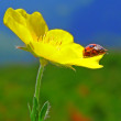 The ladybug on a flower — Stockfoto