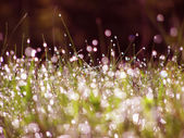 Dew on green grass under the morning sunlight — Stock Photo
