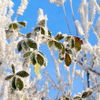 Frozen tree branch covered with hoarfrost — Stock Photo #37975079