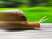 Speed snail — Stock Photo
