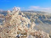 Winterlandschaft — Stockfoto