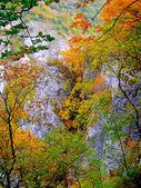 山の秋のイメージ — ストック写真