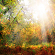 Autumn sunrise — Stock Photo #38083211