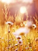 Paesaggio assolato alba — Foto Stock