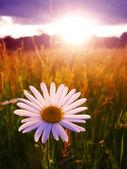 Sunny dawn landscape — Stock Photo