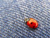 A ladybug on blue jeans texture — Stock Photo