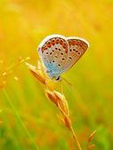 Motyl na Dziki kwiat lato — Zdjęcie stockowe