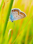 Butterfly on a summer wild flower — Stock Photo