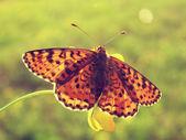 Butterfly on a summer wild flower — Zdjęcie stockowe