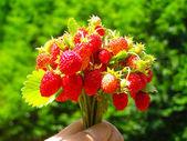 Buquê de morango selvagem — Foto Stock