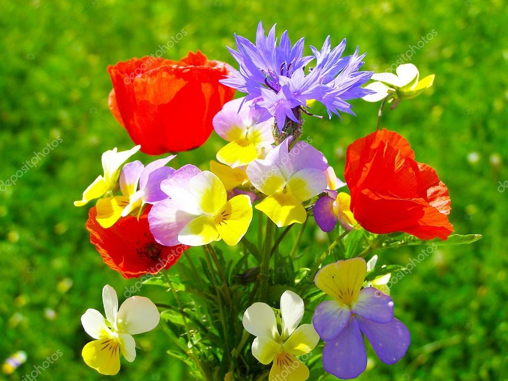 Lumineux bouquet color de fleurs naturelles sauvages et for Bouquet de fleurs sauvages