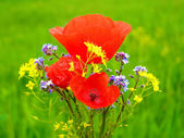 Red poppy in the green field of grass — Stock fotografie