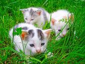 Three little kittens sitting on the grass — Foto Stock