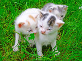 Three little kittens sitting on the grass — Stock Photo