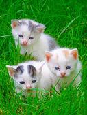 Three little kittens sitting on the grass — Stock Photo