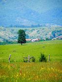 Romanian summer countryside — Foto Stock